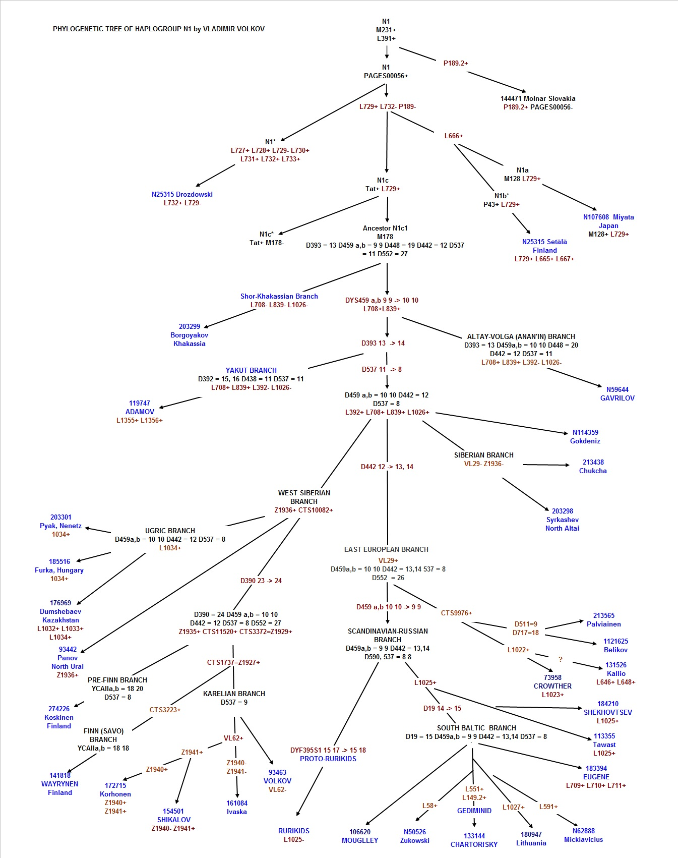 PHYLOGENETIC TREE OF HAPLOGROUP N